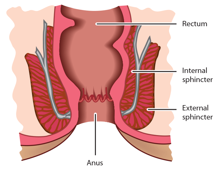 internal-and-external-anal-sphincter